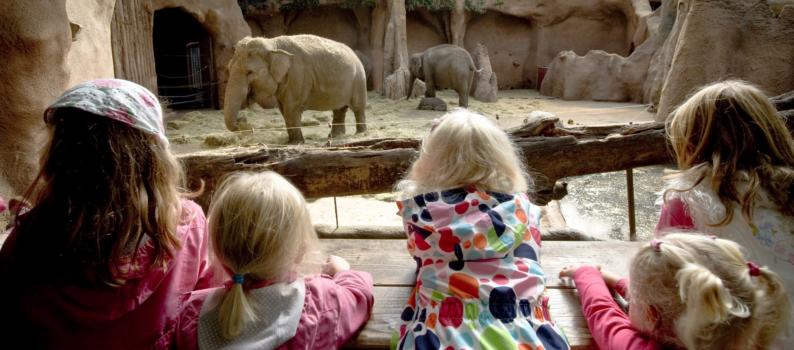 olifantenverblijf diergaarde blijdorp daarzijn